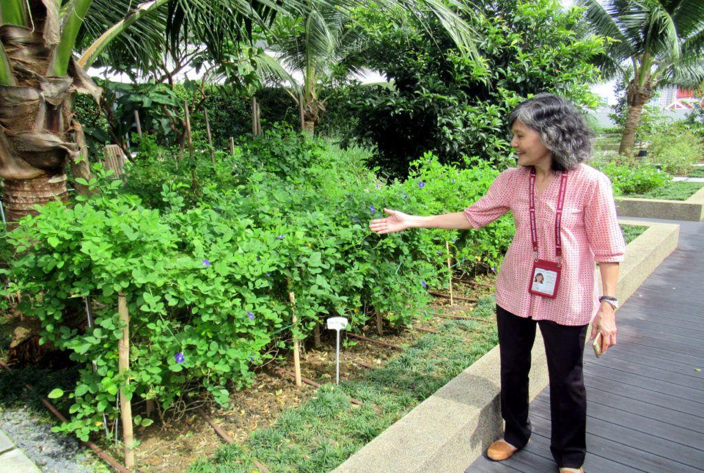 Singapore Food Tours Garden