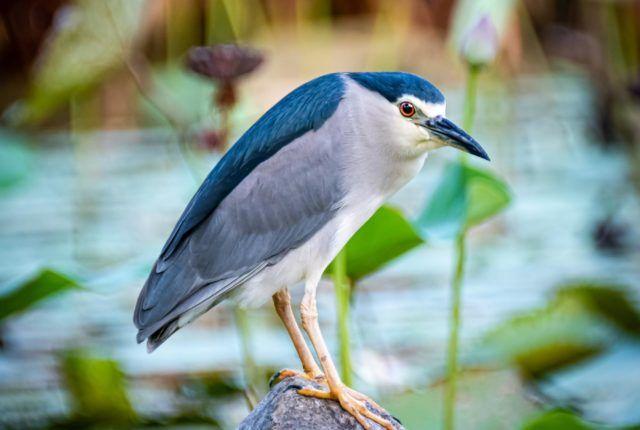 Gardens By The Bay Grey & Blue Bird
