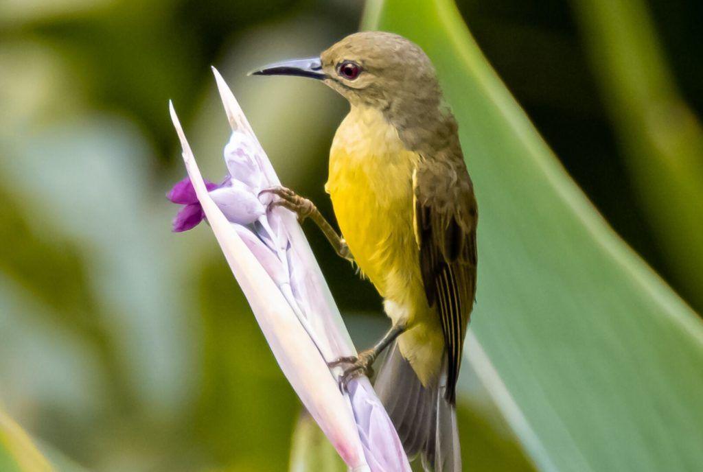 Gardens By The Bay Yellow Bird