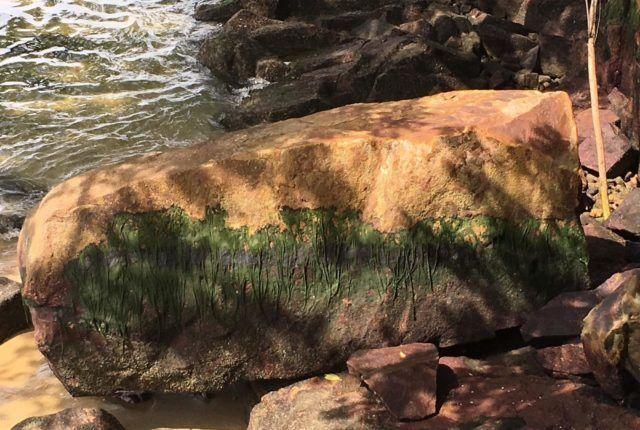Pulau Ubin Nature Walk