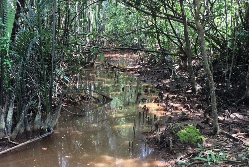 Pulau Ubin Discovery walk