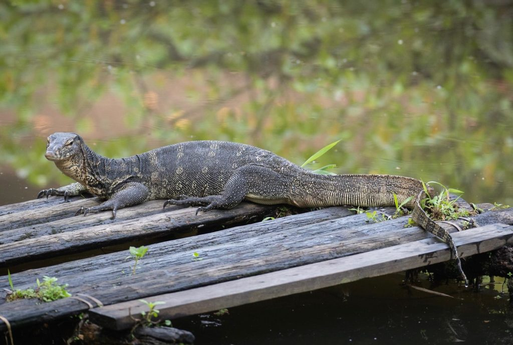 Sungei Buloh water monitor