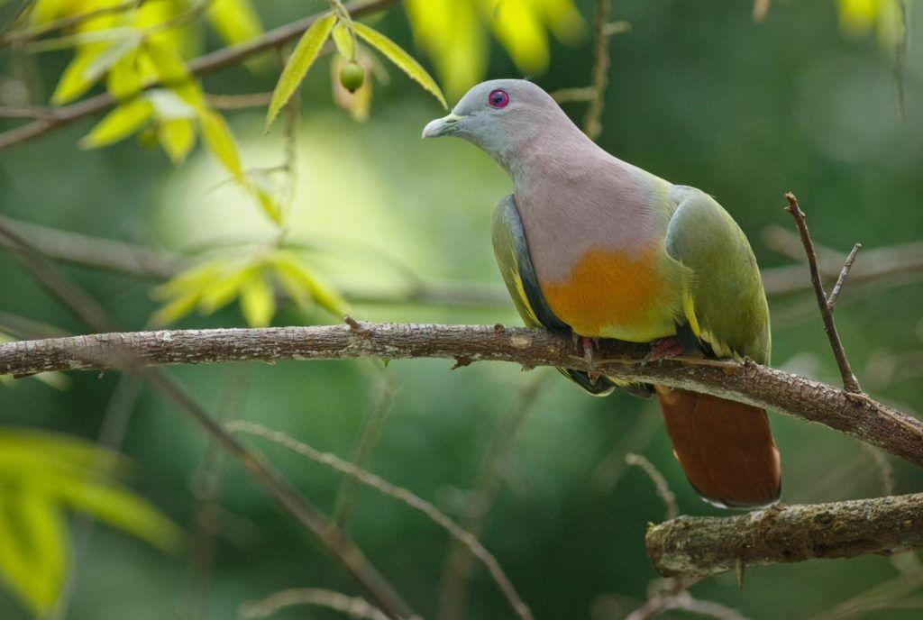 Sungei Buloh Bird Watching